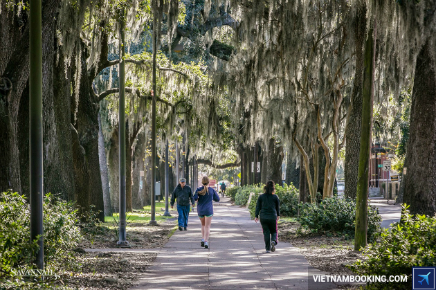 ve may bay di Savannah