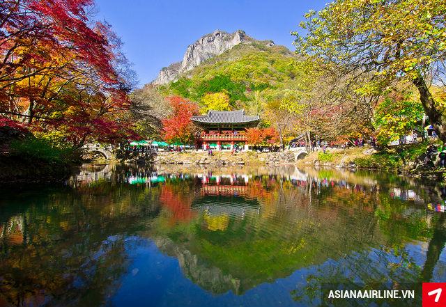 Mua vé máy bay đi Hàn Quốc hãng Asiana Airlines