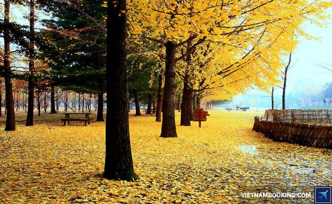 ve-may-bay-di-han-quoc-18-11-2015-5