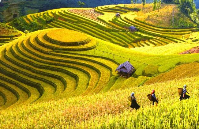mua tour du lịch Hạ Long Sapa giá rẻ