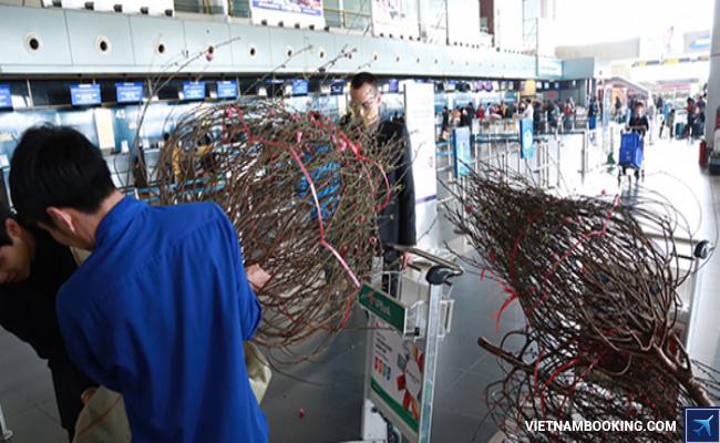 vietnam airlines van chuyen mai dao
