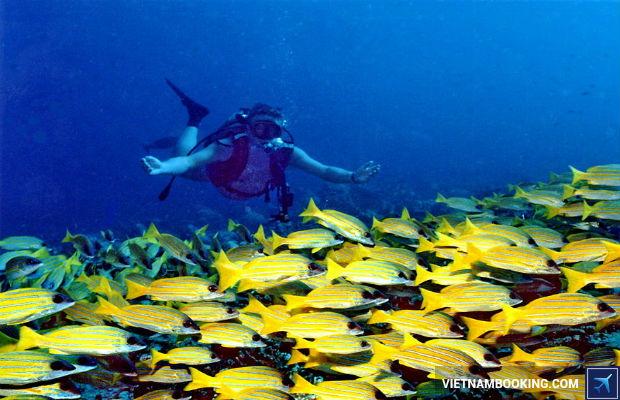 Cẩm nang du lịch Maldives
