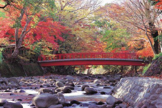 Du lịch Nhật Bản vào tết nguyên đán