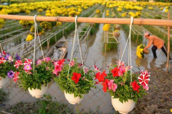 Vườn hoa Sa ĐÉc