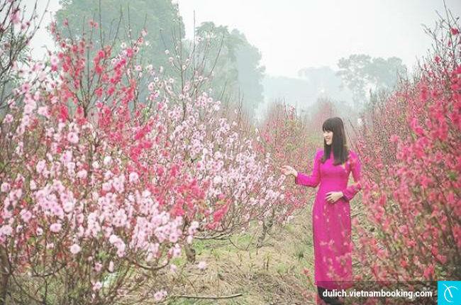 nhung lang hoa dep nhat viet nam