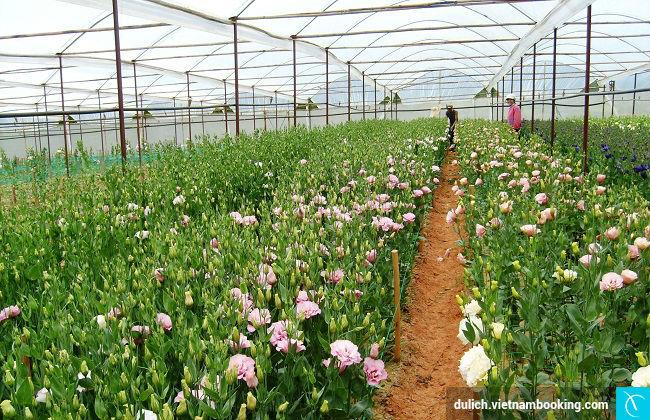 Nhung hang hoa dep nhat viet nam
