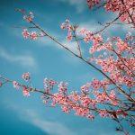 Du xuân – Đà Lạt thành phố mùa xuân