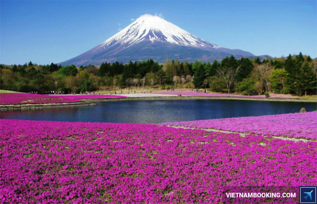Mua tour du lịch Nhật Bản 6n5đ giá tốt nhất