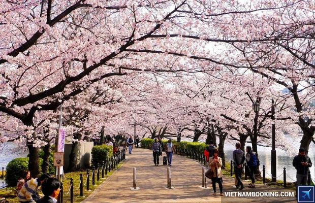 Tour du lịch Nhật Bản 6n5đ giá tốt nhất