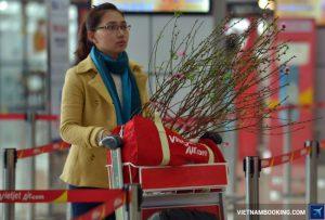 Vietjet Air nhận vận chuyển mai đào Tết Đinh Dậu 2017