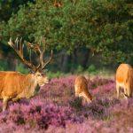 Những điểm đến đẹp nhất của du lịch Hà Lan
