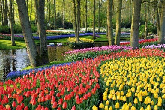 tour du lịch Hà Lan