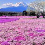 Những địa điểm ngắm hoa lý tưởng ở Nhật Bản
