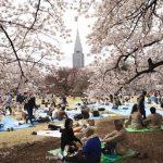 Điểm đến hàng đầu ở Nhật Bản để ngắm hoa anh đào