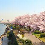 Cập nhật thông tin về một số lễ hội hoa ở Nhật Bản