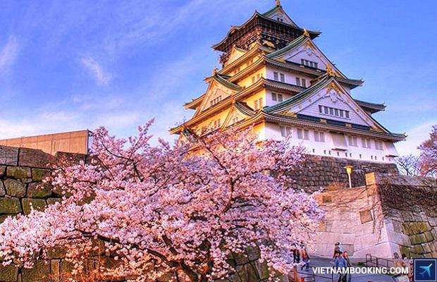 du lịch nhật bản mùa anh đào kyoto osaka hakone tokyo giá rẻ