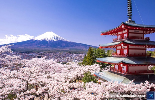 đặt tour du lịch nhật bản mùa anh đào kyoto osaka hakone tokyo
