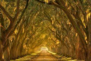 Nhữngđường hầm cây đẹp mê hồn như lạc vào xứ sởthần tiên