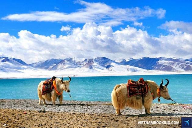 đặt tour du lịch tây tạng trung quốc 9n8d