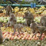 Khám pháthị trấn Khỉđộc đáo ở Thái Lan