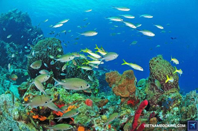 Tour du lịch Maldives giá rẻ nhất