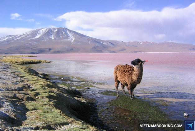 visa di bolivia