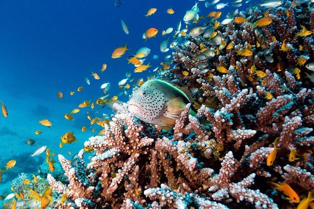Du lịch thám hiểm Maldives