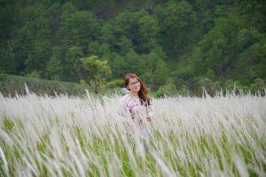 Đồi cỏ lau thơ mộng gây sốt ở đảo Bình Ba