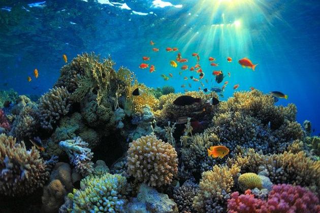 Tour du lịch Cairns