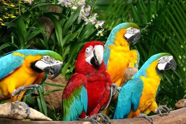 Công viên chim ở Kuala Lumpur