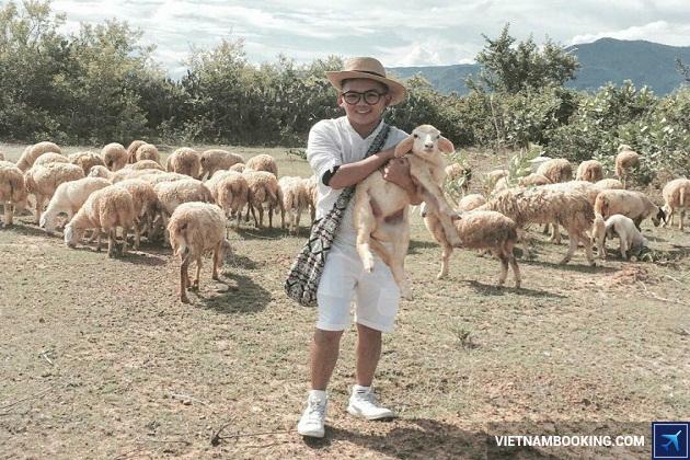 Du lịch cánh đồng cừu Ninh thuận