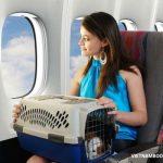 Quy định vận chuyển vật nuôi của Thai Airways