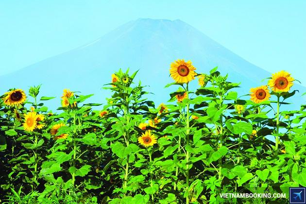 Du lịch Hokkaido Nhật Bản