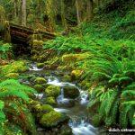 Trải nghiệm cung đường xuyên rừng cực đỉnh ở vườn quốc gia Phú Quốc