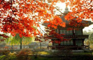 Du lịch Hàn Quốc mùa lá đỏ 5N4Đ: Nami – Everland – Cung điện hoàng gia