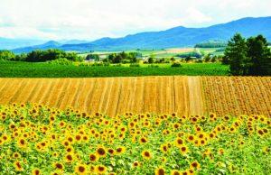 Du lịch Nhật Bản mùa hoa hướng dương 4N3Đ