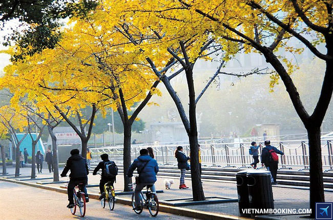 ve may bay di shanghai