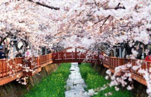 Tour du lịch Hàn Quốc giá rẻ 2019