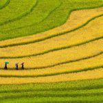 Tour miền Bắc 6N5Đ: Hà Nội – Hạ Long – Lào Cai – Sapa – Hà Khẩu