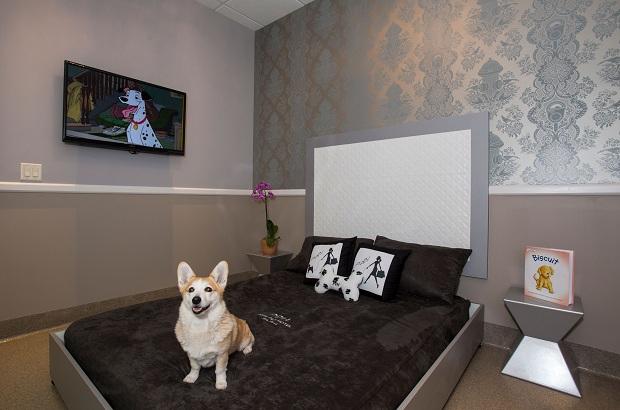 Phòng có giường riêng trong khách sạn cho mang theo chó mèo