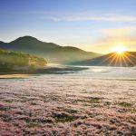 Tour du lịch Đà Lạt 3N3Đ: Hội cỏ hồng