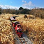 Tour du lịch Hàn Quốc 5N4Đ : Mùa thu rực rỡ Xứ sở Kim Chi