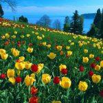 Mua vé máy bay đi Đà Lạt giá rẻ tham gia lễ hội hoa đặc sắc