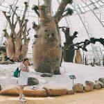 Nghìn góc sống ảo ở Đồi Vạn Hoa, điểm đến mới toanh của du lịch Nha Trang