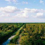 Lạc bước trong rừng U Minh Hạ với vé máy bay giá rẻ đi Cà Mau