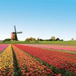 Mua vé máy bay đi Amsterdam của Vietnam Airlines khám phá phố cổ yên bình