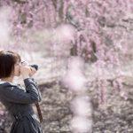 Đến Nhật Bản mùa Xuân ngắm hoa Ume đẹp mơ màng
