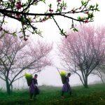 Ngẩn ngơ trước vẻ đẹp rực rỡ của mùa Xuân Sapa