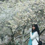 Săn vé rẻ Sài Gòn Hà Nội tháng 2 – đến Mộc Châu ngắm hoa mận trắng