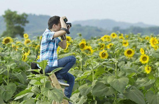 tour ngắm hoa hướng dương xứ nghệ